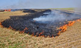 On the field burns stubble. The field burns stubble and post-fallen remains after harvesting grain crops Stock Photos