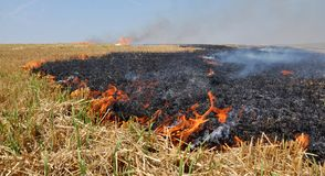 On the field burns stubble. The field burns stubble and post-fallen remains after harvesting grain crops Royalty Free Stock Photo