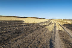 Field of burnt stubble Royalty Free Stock Photography