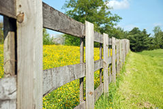 Field of Buttercups. Rustic weathered wood fence separating mowed grass from a pasture of buttercups Stock Photography