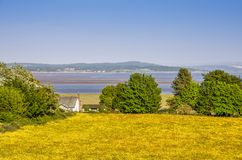 Field of Buttercups next to Morecambe Bay Stock Image