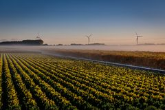 Early morning before sunrise in the polder royalty free stock photography