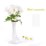 Field camomiles in a vase Royalty Free Stock Photo