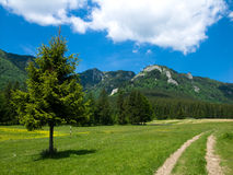 Field in Carpathian mountain royalty free stock image