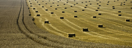 Field of cereals Stock Photos
