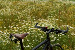 Field, chamomile, bike, relax, skate, lug, wheel Stock Images