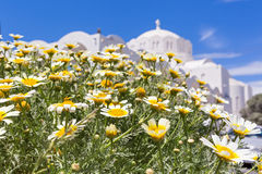 Field of chamomile and the Church building Royalty Free Stock Photos