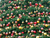 Field of christmas decoration. Of a big christmas tree Royalty Free Stock Photo