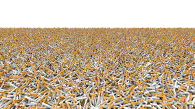 Field of cigarettes. Field completely covered with thousands of cigarettes Royalty Free Stock Image