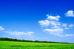The field and clouds. The green field and white clouds Stock Photography
