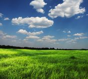 Field and clouds Royalty Free Stock Photo