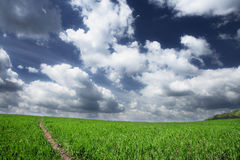 Field and clouds. Background of sky and grass green field Stock Image