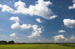 Field and clouds. Young vegetation with large clouds Royalty Free Stock Images