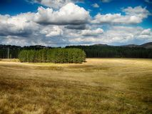 Field with clouds. Beautiful field with clouds in mountain Zlatibor,Serbia stock photo