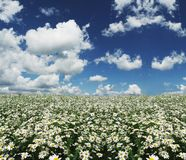 Field and clouds Royalty Free Stock Photography