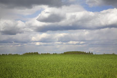 Field and clouds in Vakhonino. Russia.  Royalty Free Stock Photography