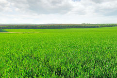 Field and cloudy sky Royalty Free Stock Photography