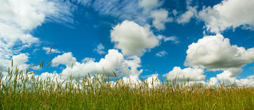 Field and cloudy sky Royalty Free Stock Photos