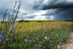 Field and cluds. Stock Photography