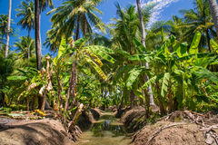 Field of coconut and bananas trees in Ampawa Stock Photos