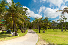 Field of coconut trees on koh kho khao island Stock Photography