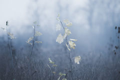 Field in cold winter day background Royalty Free Stock Image