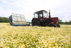 Field of colorField of colorful daisy with  farm tractor in the backgroundful daisy with out of focus farm tractor in the backgrou Royalty Free Stock Image