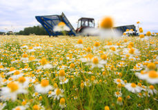 Field of colorful daisy with out of focus farm tractor in the background Stock Images
