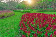 Field of colorful flowering plant on green grass lawn with group of trees in a good care maintenance garden, under sunshine and. White sky in the morning stock images
