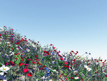 Field of colorful flowers. 3d image Royalty Free Stock Photography