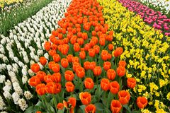 A field of colorful flowers Stock Image