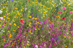 Field with colorful wildflowers in spring Stock Photo