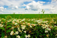 Field with colors and blue sky with clouds. Concept Royalty Free Stock Photography
