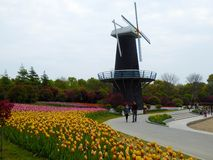 A field of colourful tulips and windmill. A field of colorful tulips blooming with windmill background in early spring at Shanghai flower port China on a sunny Stock Photo