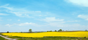 The field of colza Royalty Free Stock Photos