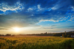 Field of colza Stock Image