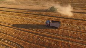 Field, combine and truck. Moving combine harvester and dust. Wheat field stock video