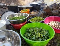 Field cooking- edible plants in bowels and  puts on the fire. On the ground Royalty Free Stock Photos
