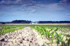 A field of corn, along which a self-propelled sprayer moves, spraying the herbicide stock images