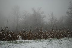 A field of corn covered with snow, is hidden by fog stock photo