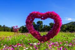 Field cosmos flower beautiful with daylight Stock Photo
