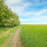 Field and country road Stock Images