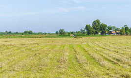 Field countryland Royalty Free Stock Photos