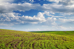 Field in countryside Stock Photography