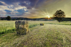 Field in the countryside filled with straw bales Stock Photo