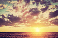 Field, countryside at sunset. Harvest time. Vintage Royalty Free Stock Photography