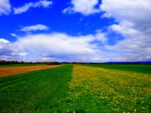 Field covered with dandelions stock photos