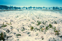 Field covered with first snow Stock Image