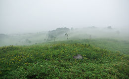 Field covered with fog. On a rainy day Stock Photo