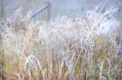 Field Covered Freezing Fog Royalty Free Stock Image